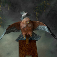 Original one of a kind, exquisite birdcarving of a Red Shouldered Hawk being chased away from a English House Sparrow.