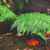 Fern and Red Leaf -photograph