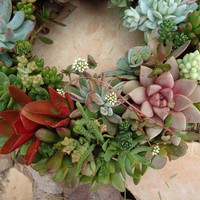 RESERVED for alpearson 12 Living Succulent by SucculentDesigns