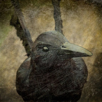 Black Raven Photograph, Gothic Home Decor, 8x8 Fine Art Print,Macabre Photo