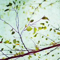 leaves of summer, nature, tree, fine art photography