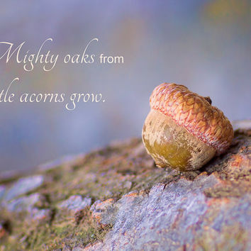 Quotation: Mighty Oaks from Little Acorns Grow