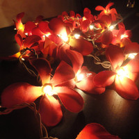 35 Globes Red Frangipani Fairy Lights String 3.5M