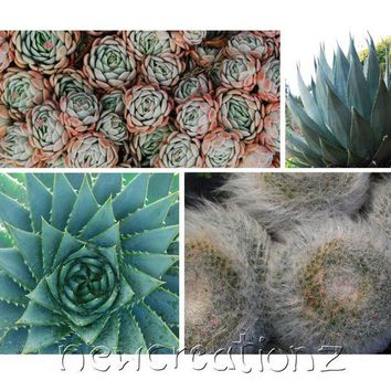 Succulents photographic print 8x10