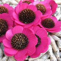 Hot Pink Wood Sunflowers Made from Birch Shavings 2 dozens by accentsandpetals on Zibbet