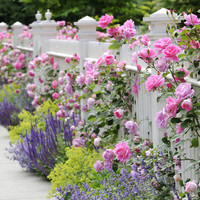 Google Image Result for http://hgtv.sndimg.com/HGTV/2010/07/28/iStock-9999863_combining-plants-roses-salvia-catmint-ladys-mantle-fence_s4x3_lg.jpg