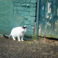 A Cat In The Old Alley 8x8 Photogra.. on Luulla