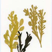 seaweeds original cut paper drawing