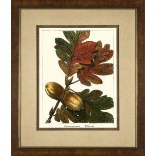 Phoenix Galleries Large White Oak Framed Print - HP740