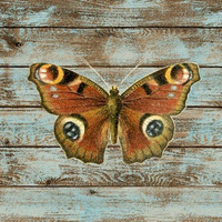 Butterfly Temporary Tattoo - Bohemian Style - Rustic Nature Butterfly - Wild and Free