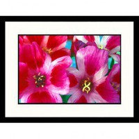 Great American Picture Godetias Framed Photograph - IS1050428