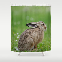 Little rabbit on a meadow Shower Curtain by Tanja Riedel