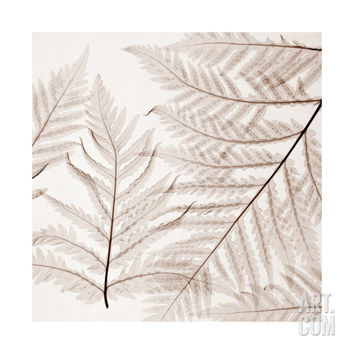 Ferns I Giclee Print by Steven N. Meyers at Art.com