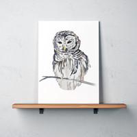 Nursery poster Grey Owl painting Bird watercolor print Natural history