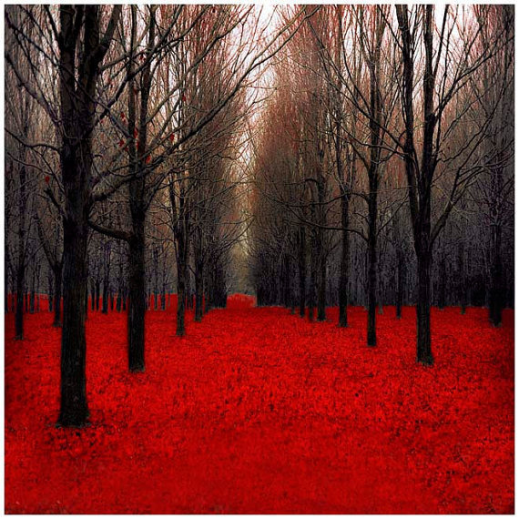 Forest photography dark red home decor from raceytay for Red wall art