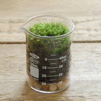 Mini Moss Terrarium in Graduated Glass Beaker