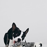Ware of the Dog Womens FP Pet Project Hand Knit Zebra Lovey - Black and White One