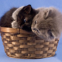 Cute Kittens Hugging, Snuggling Cats in a Basket, Kitten Art Print