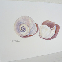 Shell Painting Beach Art Moon Snail Seashell Watercolor Painting Small Original Watercolor Painting