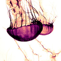 Jellyfish Art Print by Loaded Light Photography