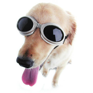 Doggles at Firebox.com