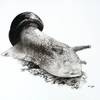 Snail charcoal drawing, original artwork