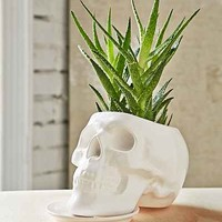 Outliving Ceramic Skull Planter- White One