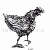 Chicken - Original Pencil Drawing 15.5 x 11.5 inch - Ready To Ship