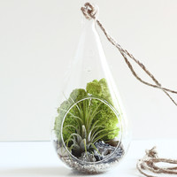 Geode and Pyrite Teardrop Air Plant Terrarium Kit