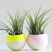 Mini Air Plant Pod Set of 2 - Neon Yellow & Sweet Pink