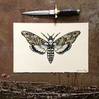 Death's Head Hawkmoth, Limited Edition print