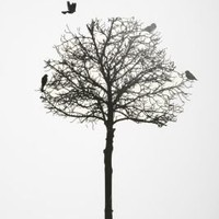 UrbanOutfitters.com > Silhouette Tree Wall Decal