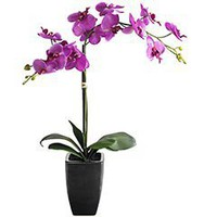 Pier 1 Imports - Product Details - Purple Orchid in Ceramic Pot