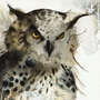 Great Horned Owl Watercolor Print by amberalexander on Etsy