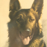 Framed German Shepherd Art Signed Vintage