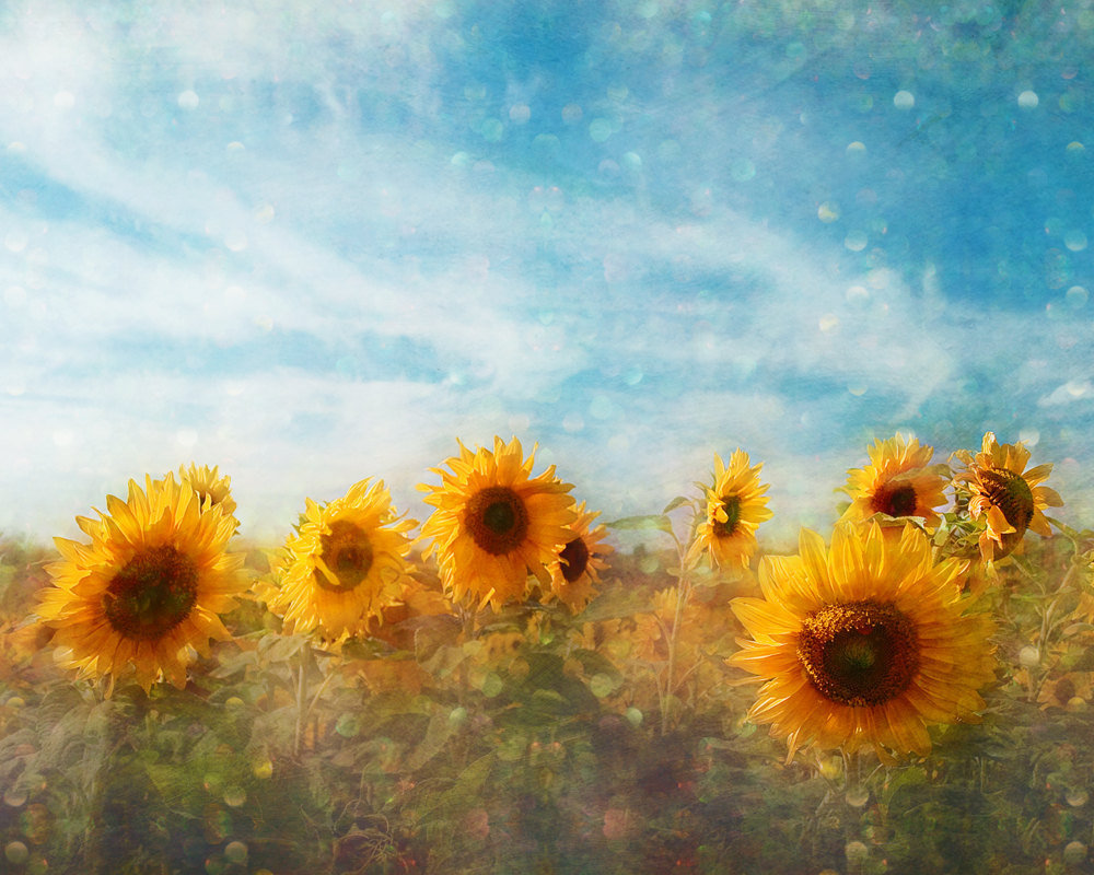 Sunflower Flowers Photograph Art Pr.. on Luulla