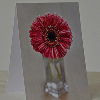 Photo Greeting Card - Pink Gerbera Daisy - All Occasion Blank Card - Pink and White Flower Photograph