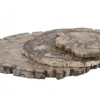Petrified Wood Trays