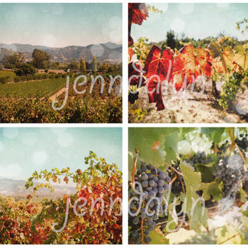 Harvest Season - FOUR PHOTO set, fall decor, wine country decor, vineyard vine, wine art, wine decor, california, napa valley, sonoma