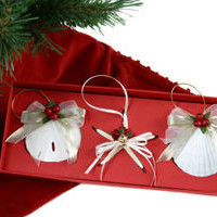 Seashell Boxed Ornament Set | OceanStyles.com