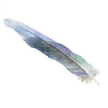 Feather Watercolor Painting - Blue, Green, Purple, Gray, Turquoise, Feather, Australian Parrot,  - Art Print of Watercolour