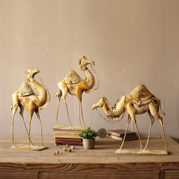 Three Fine Young Camels