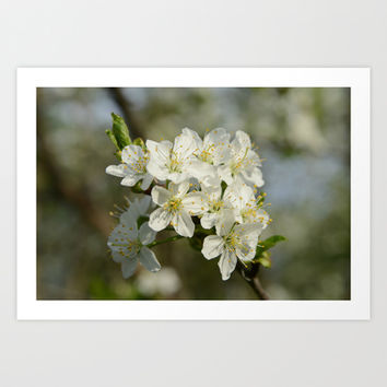 Spring Flowers Art Print by Anstey