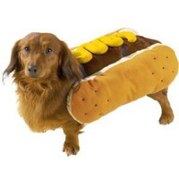 Amazon.com: Casual Canine Polyester Hot Diggity Dog Costume, Small, Mustard: Pet Supplies