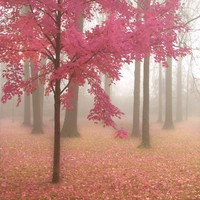 Misty Morning in Pink  8x8 Art Print Fog and by donnageissler