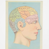 Phrenology Head Poster