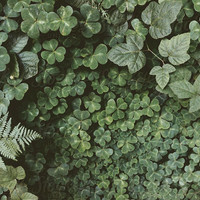 Forest Foliage by Kevin Russ