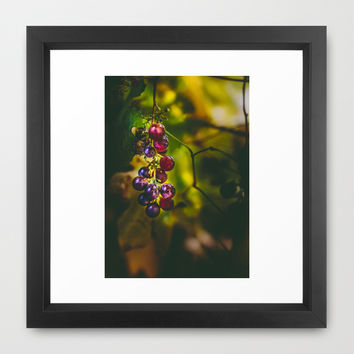 Pinot II Framed Art Print by HappyMelvin
