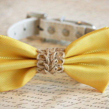Yellow dog bow tie, Yellow wedding dog collar, Country wedding, Beach wedding, Bow attached to leather collar, Rustic wedding