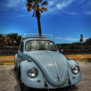 Tybee Island Beach Bug 002
